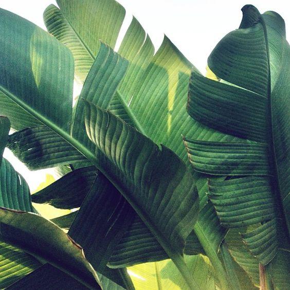 INSPIRACION: Hojas Verdes   ENSALPICADAS