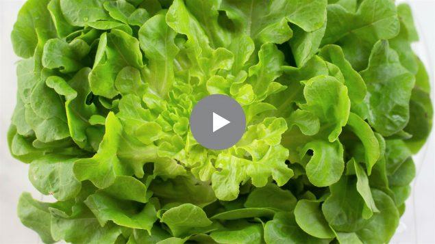 Video de Lechuga Salanova y Vinagreta Perfecta